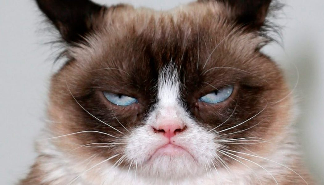 Fallece GrumpyCat